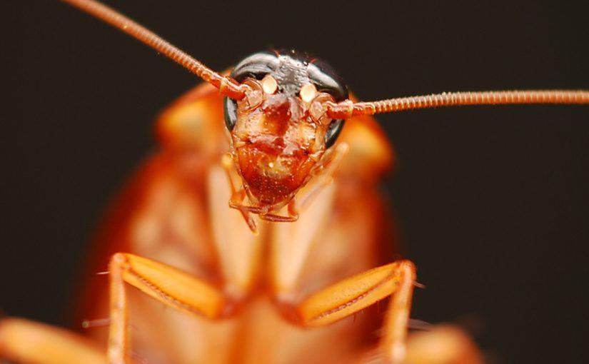 Има начин да се отървете от хлебарките завинаги
